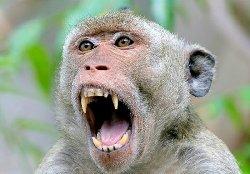 میمون لباس شخصی که قاچاقی وارد ایران شد