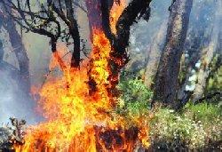یک فاجعه زیست محیطی در شرق مازنداران