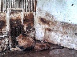 زندان هایی مخوف برای حیوانات در ایران