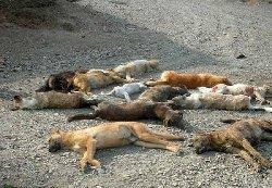 فیلم؛ بازهم جنایت: سگ سوزی دسته جمعی