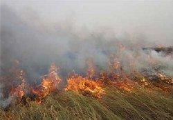 آتش زدن تالاب انزلی برای تصرف اراضی