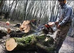 بلایی که بر سر  جنگلهای شمال آوردند؛ تکاندهنده