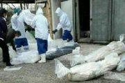 کرونا؛ گزارشهای تکاندهنده از انبوه اجساد در اهواز